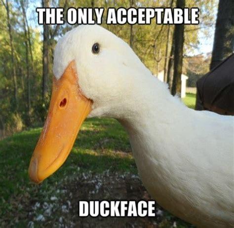 Funny Duck Meme - funny duck face meme