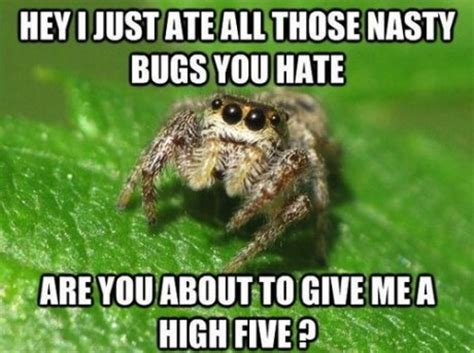 Memes About Spiders - friendly spider meme picture webfail fail pictures