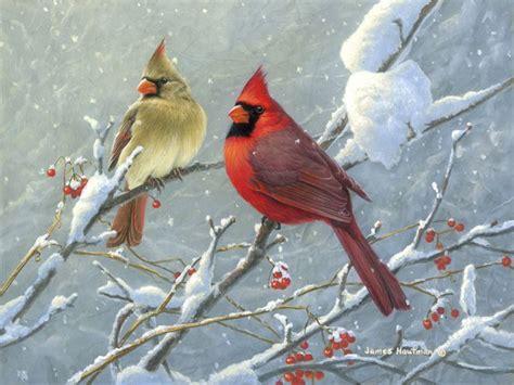 google images birds google image result for http www hautman com jiimages