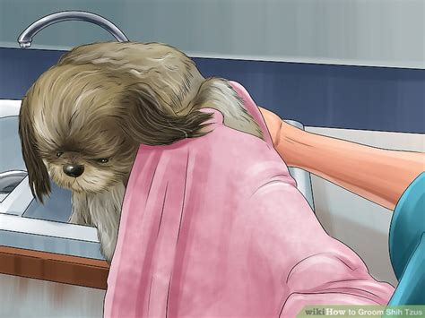 shih tzu eye boogers how to groom shih tzus 14 steps with pictures wikihow