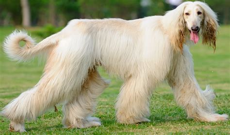 dog grooming grooming different dog breeds 6 resources on grooming intensive dog breeds top dog tips