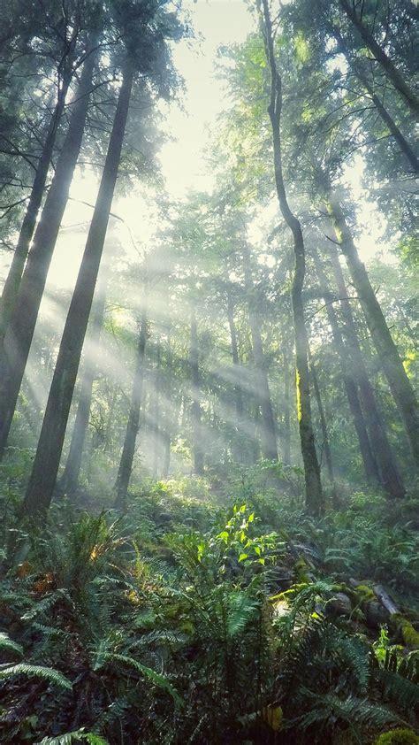 wallpaper light forest tree  nature