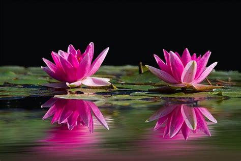 reiki healing  peace mantras reiki rays