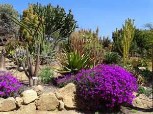 desert flowers desert flowers