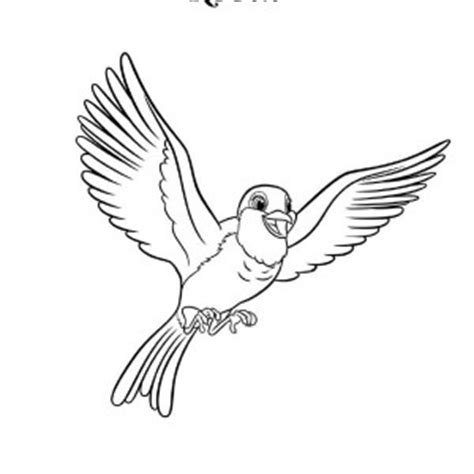 red robin coloring page red robin bird coloring page