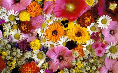 imagenes wallpapers flores jardin de muchas flores hd 1920x1200 imagenes