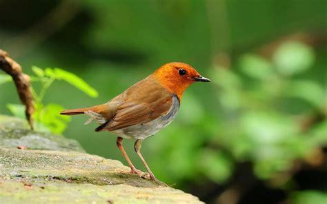 Wallpaper Cute Bird | our beautiful world cute birds