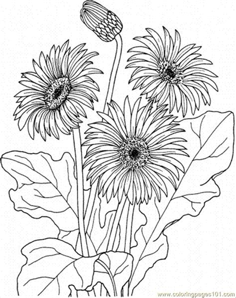 coloring page daisy flower free daisy coloring pages