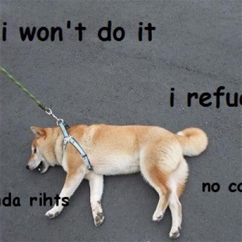 Law Dog Meme - like a boss baby polar bear meme memeaddicts