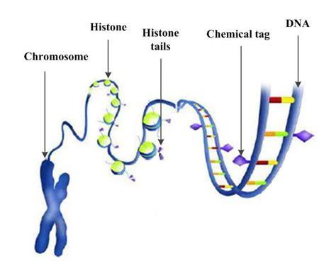 dna pattern matching algorithm hidden genes genetic algorithm ossama abdelkhalik
