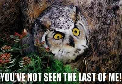 Owl Meme - owl meme on tumblr