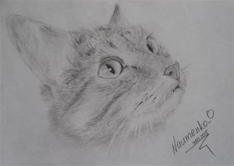 Cat Pencil cat pencil drawing by naumenkoo on deviantart