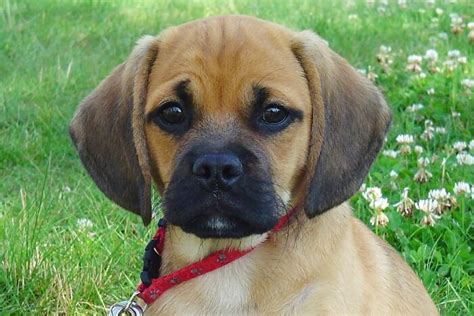 pet stores that sell puppies in ct puppies and dogs for sale in ct buy in ct breeder pet store