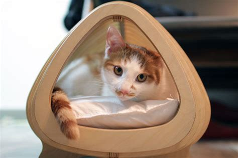 fishy feline beds fish born cat house