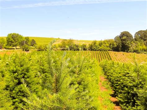 christmas tree farms with real estate in monroe or carbon county pa farm ranch real estate in salem albany lebanon corvallis steve helms real estate