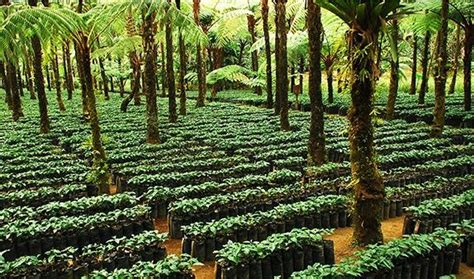Rainforest Alliance Coffee Up to 4.5% of Total Global Production   Daily Coffee News by Roast
