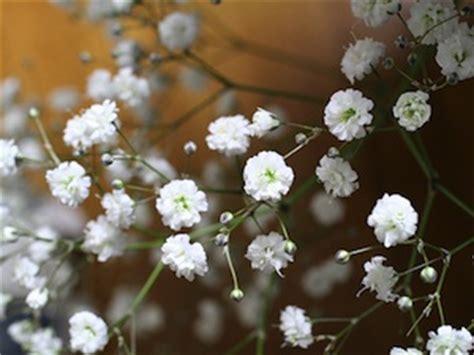 Fleurs Jardin Octobre