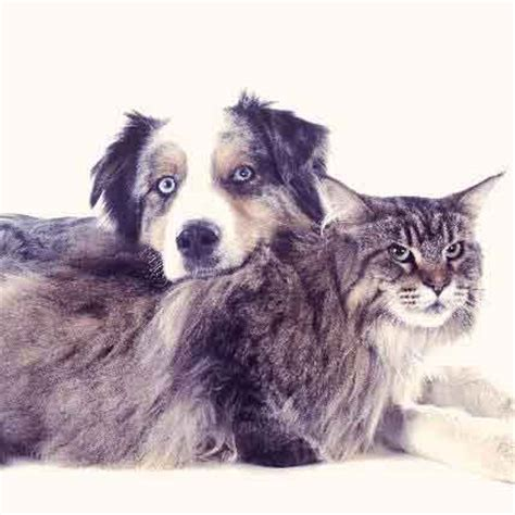 liver cancer in dogs all about cat examinations what to expect at a vet visit petcarerx