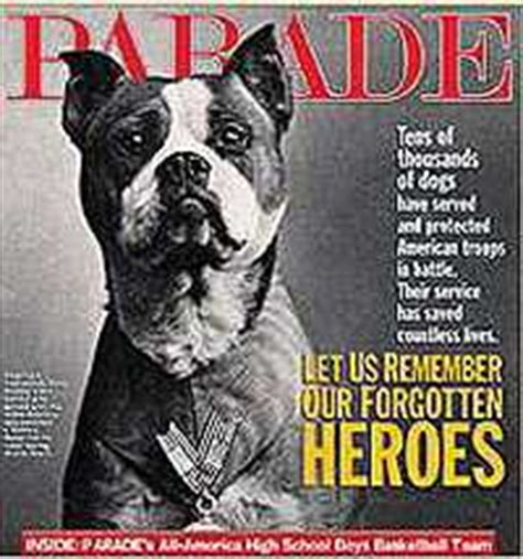 Sergeant Stubby Pictures Boston Terriers