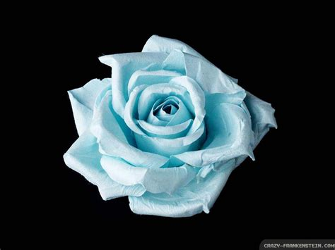 black and blue rose tattoo flower tattoos collections blue meaning