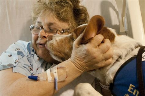 therapy dogs career therapy dogs seeking a helping finding a paw