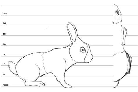 Animal Blueprint Model Sheet 3d Modeling Pinterest House Blueprints For 3d Modeling