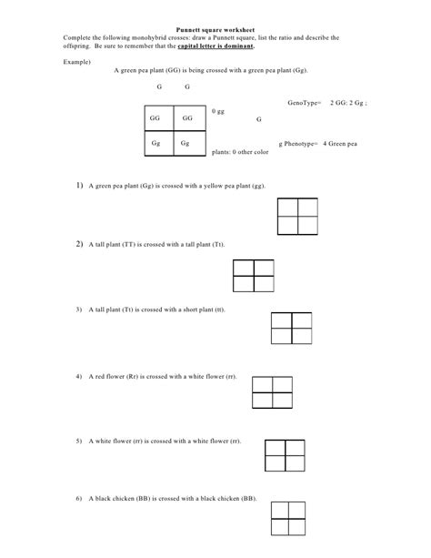 Punnett Squares Worksheet by Punnett Square Worksheet