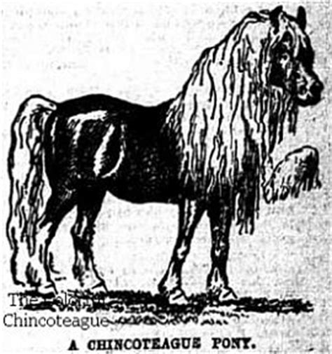 chincoteague pony coloring page historical chincoteague colors the colorful chincoteague