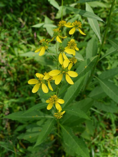 Yellow Garden Flowers Identification Yellow Flower Identification Www Pixshark Images Galleries With A Bite