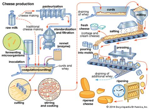 how cheese is made flowchart dairy product cheese britannica