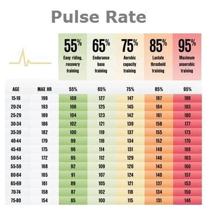 normal pulse normal pulse rate gallery