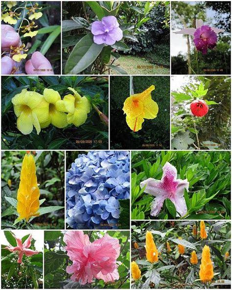 imagenes de animales y plantas de brasil flora de brasil