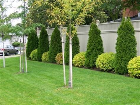 backyard bushes shrubs along fence idea landscaping pinterest
