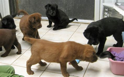 puppy everywhere animal shelter archives sweet gum