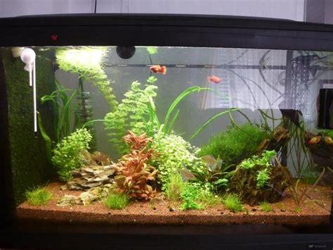 120 liter meerwasseraquarium 120 liter aquarium mit ohne pflanzen und besatz in