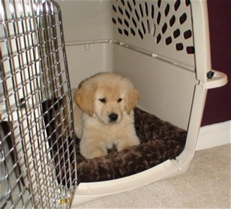 should puppy sleep in crate is crate my puppy a or bad thing