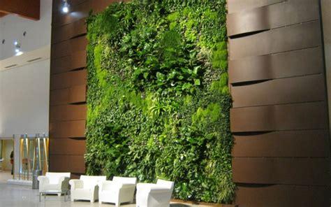 pareti verdi interni pareti verdi foto come scegliere le piante ricanti per