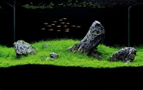 design aquascape iwagumi aquascaping styles design ideas and mistakes to avoid