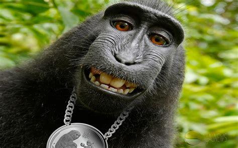 monkey wallpaper 1440x900 animals lunar monkey monkey hip hop
