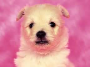 puppy wallpaper cute puppy dog wallpaper wallpaper me