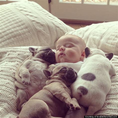covered in puppies baby covered in bull puppies timeshare news travel
