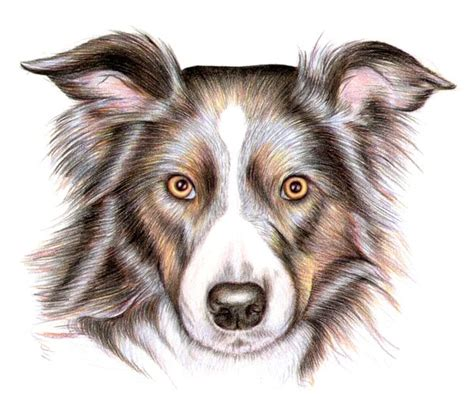 drawing of a puppy how to draw a