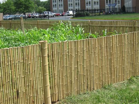 backyard bamboo fencing bamboo fencing landscaping gardening ideas