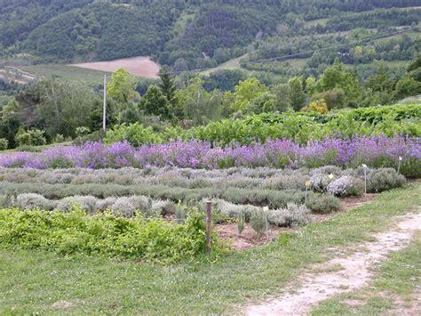 giardino delle erbe giardino delle erbe augusto rinaldi ceroni luoghi