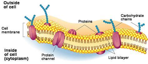 notes  cell membrane  eukaryotic cell grade
