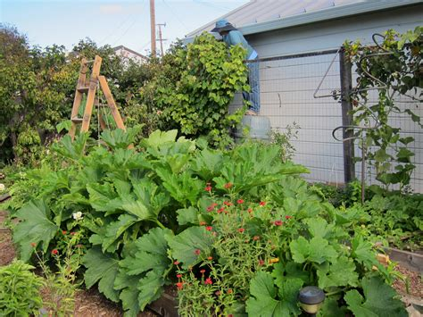 Vegetables Vegetable Garden In