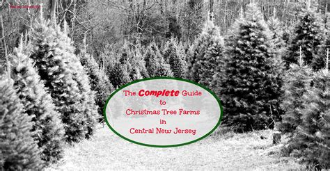 christmas tree farm new jersey home design inspirations