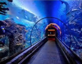 shedd aquarium chicago il things to do