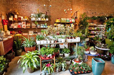 biggest online plants store best garden store options in nyc for plants flowers