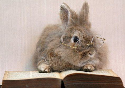 rabbits picture book cuteness bunnies with glasses gallery 10 photos